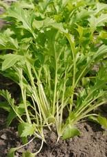 Diverse bladgroenten Namenia - Brassica rapa subsp. campestris