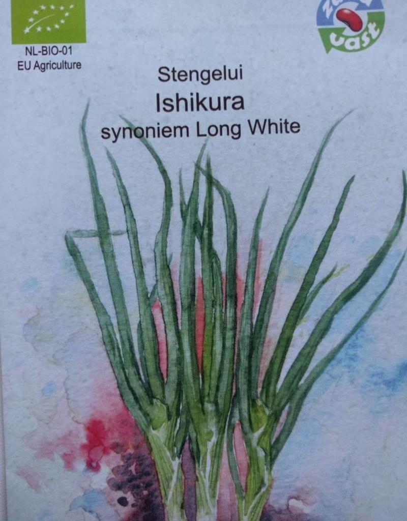 Stengelui Ishikura Long White -   in zakje aquarel