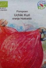 Pompoen Uchiki Kuri -  in zakje aquarel