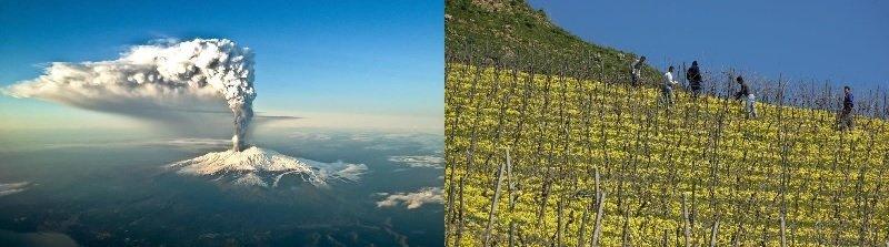 Etna en Siciliaanse kwaliteitswijnen