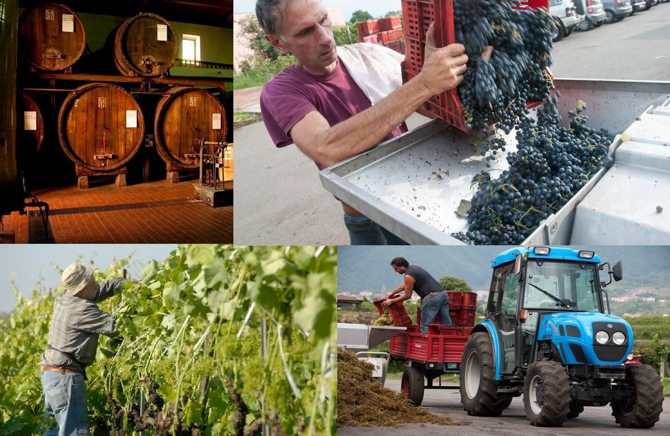 Murgo Wijnhuis, een bijzondere plek voor wijn