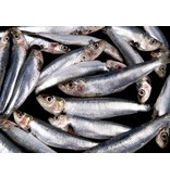 Siciliaanse pastasaus met sardines