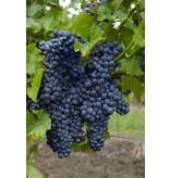 Daidone  Syrah wijnsaus uit Sicilië