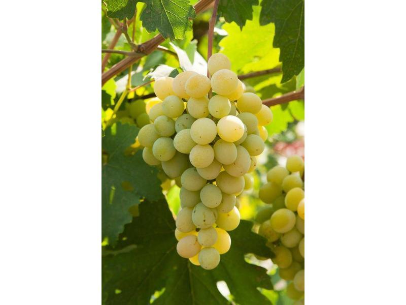 Daidone Malvasia Wijn Saus uit Sicilië, ambachtelijk bereid