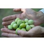 Groene olijven tapenade bereid in Sicilïë