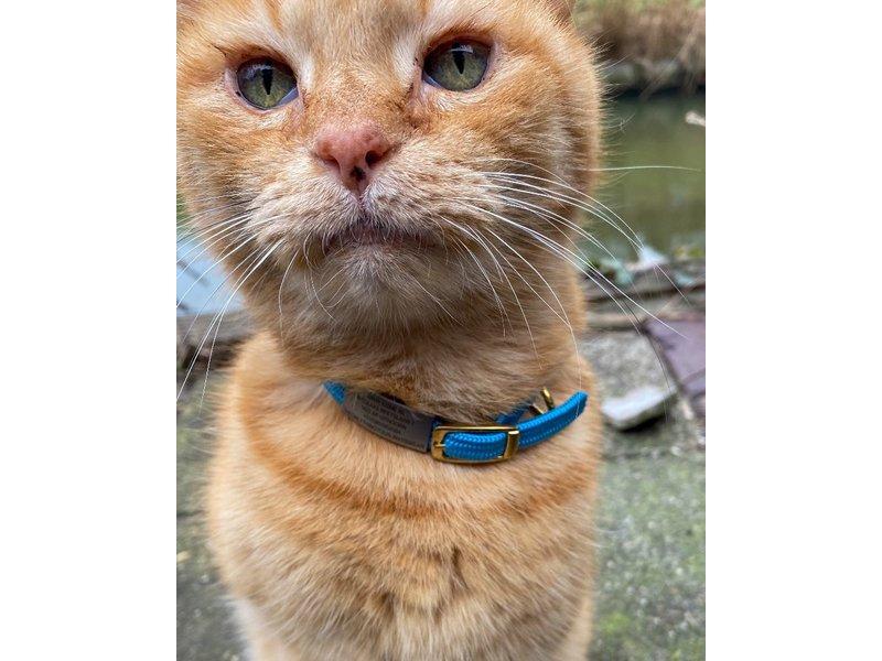Id's me plaatje Mini voor kattenriem SOS-Pet Tag