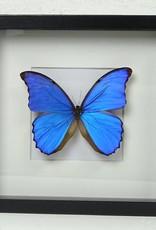 Pot & Vaas Vlinder in lijst, Blauw, 25x25cm