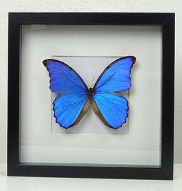 Pot & Vaas XL Vlinder in lijst, Blauw, 25x25cm