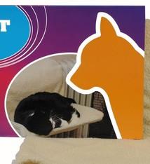 Pet Toys Cat Comfort Radiatorbed voor katten