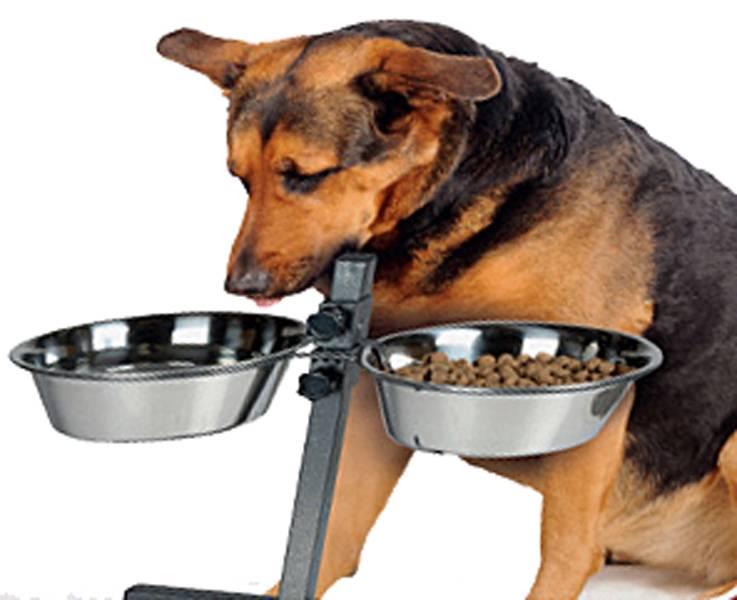 Hondenvoerbakken