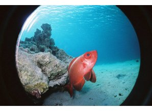 Lomography Fish Eye Submarine Case FUH100