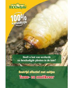 Koude aaltjes tegen larven taxuskever en snuitkever