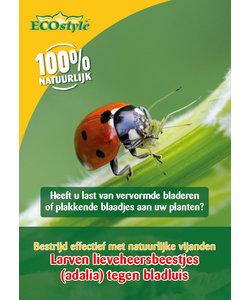 Larven van lieveheersbeestjes tegen bladluizen (adalia)
