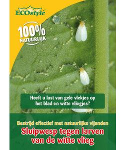 Sluipwesp tegen de larven van de witte vlieg (10 m²)
