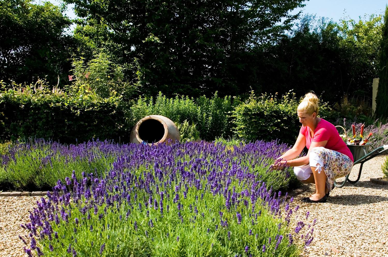 Last van een zure grond? Ontdek wat kalk voor jouw tuin kan doen!