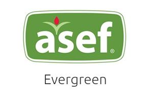 Asef Evergreen