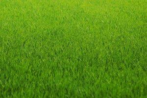 Een gazon met graszoden: zo doet u dat!