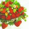 Servetten Aardbei Bowl 33 x 33 cm