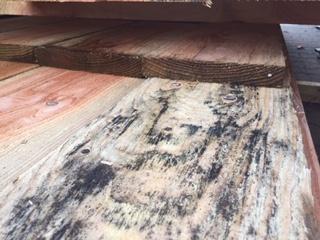 Schimmel op hout