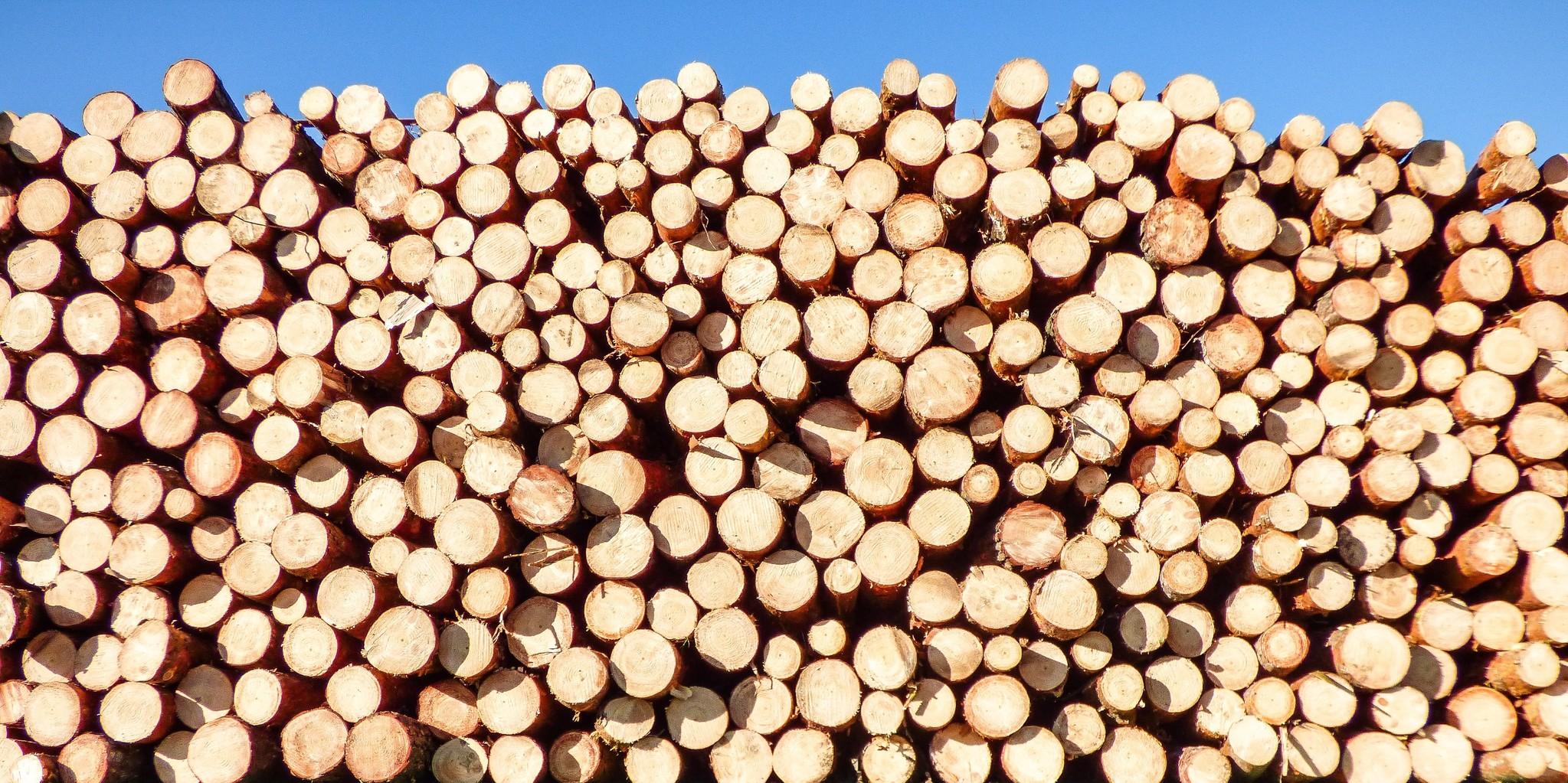 Wat is normaal in hout? Veel voorkomende eigenschappen in hout.