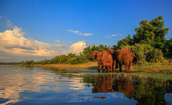 Olifanten bij het water