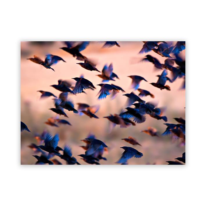 Vogelvlucht op plexiglas