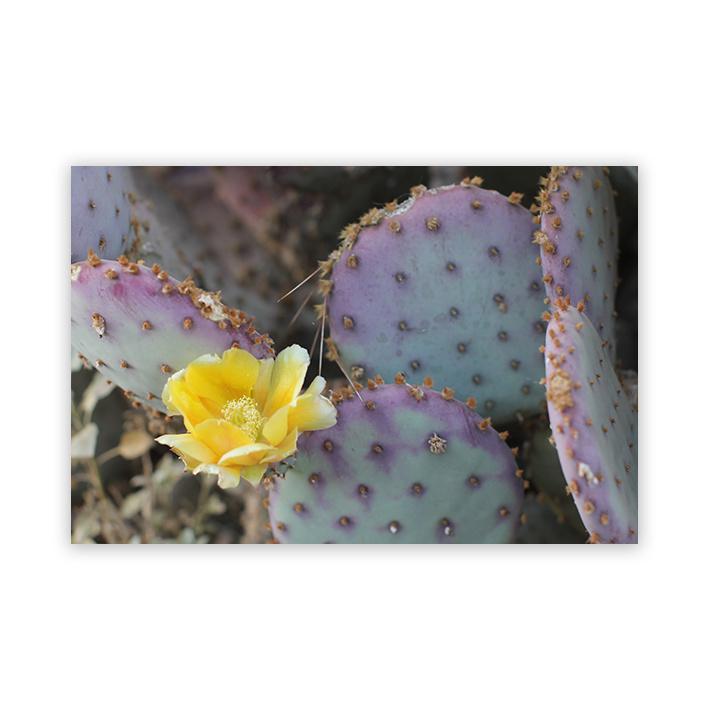 Cactus op plexiglas