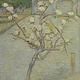 Perenboompje in bloei - Van Gogh - op Dibond