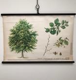 Botanische schoolkaarten