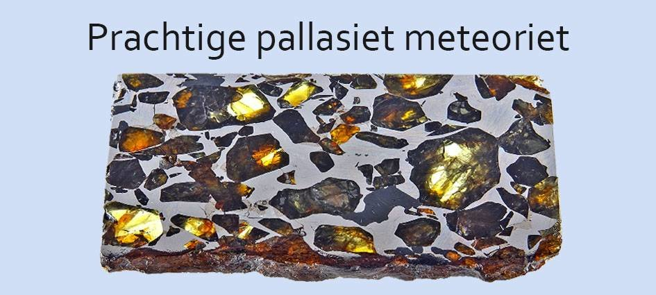 Pallasieten