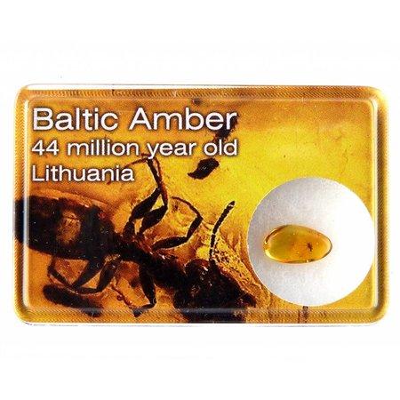 Baltische barnsteen met insect in cadeau doosje