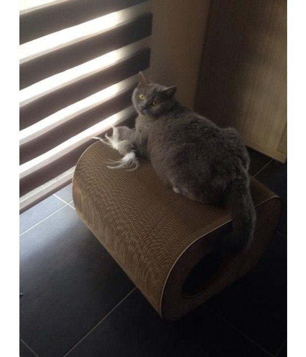Cat-on Brochhaus Junior