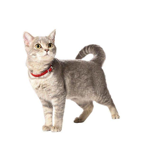 Flex kattenbandje