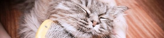 Verzorging kat