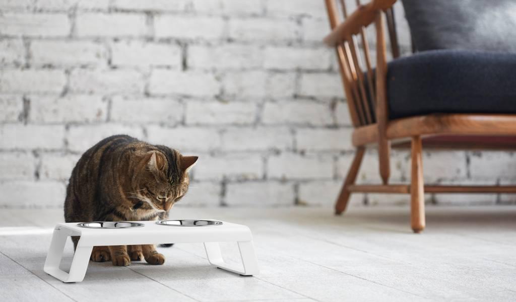 ผลการค้นหารูปภาพสำหรับ Pouring pet food into a bowl