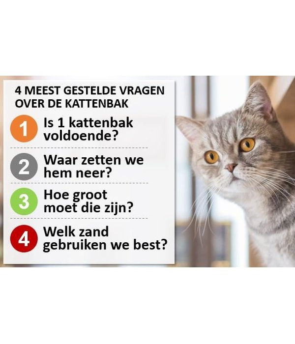 TIP: We hebben de 4 meest gestelde kattenbak-vragen voor u beantwoord!