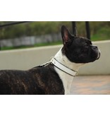Stoere halsbanden voor stoere honden