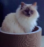 Cat-on La Coupe (2 sizes)