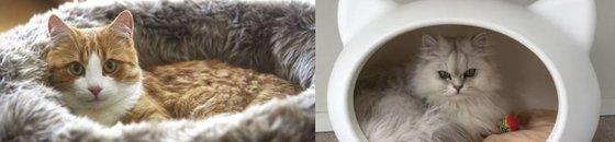 Moderne kattenmanden