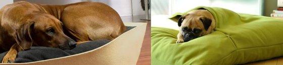 Orthopedic Cushions & Beds