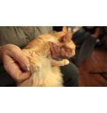 Info Pagina: Nagels knippen van uw kat