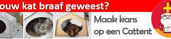 Doe mee en win een Cattent van Kartent, Sint Wedstrijd