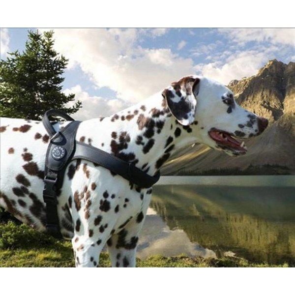 Primo dog harness zwart
