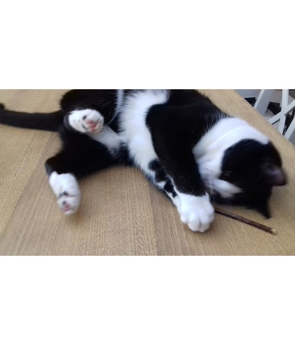 NipNaps Matatabi stokjes - Silver Vine - Japanse Catnip