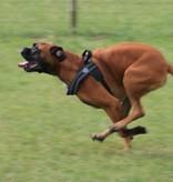 Tre Ponti Primo PLUS dog harness