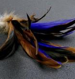 Tabby Tijger Golden Rooster Teaser