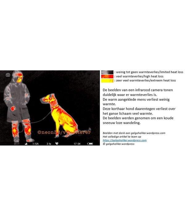 INFO: Heeft mijn hond een jas nodig?