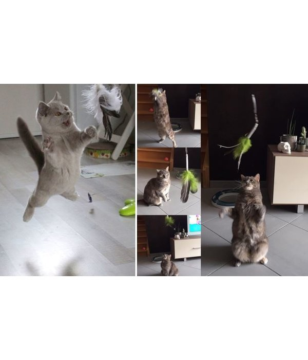 Tabby Tijger Kattenhengel met vogel
