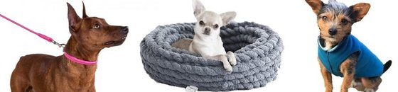 Specials kleine hondjes (chihuahua, toy poedel, pomeriaan, ea)
