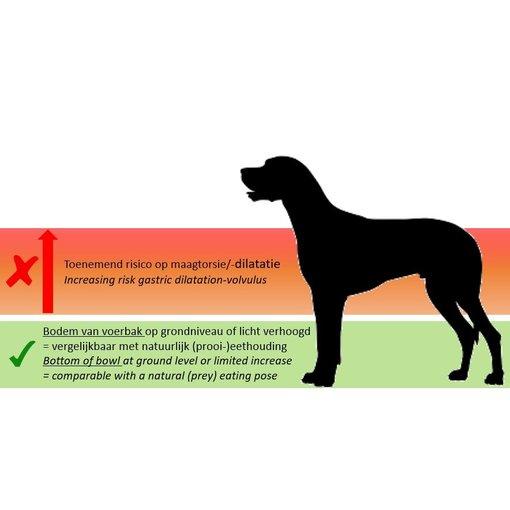 INFO: Wel of geen hoge voerbak voor grote honden?